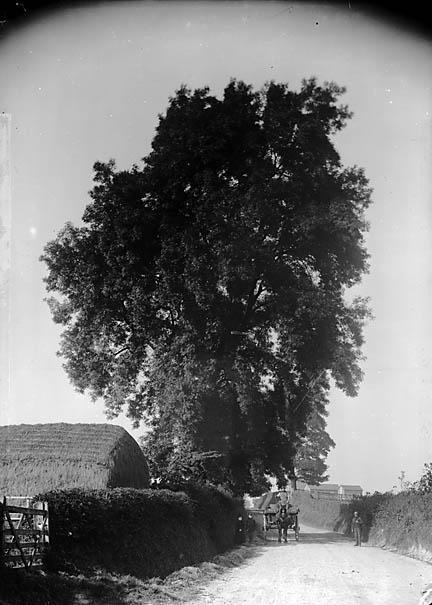 Ash Tree Norse Mythology