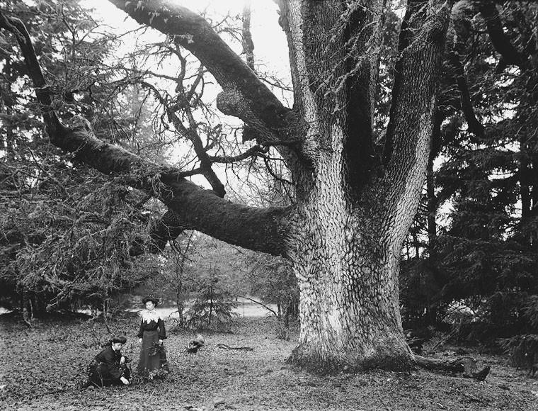 Oak Tree in Norse Mythology